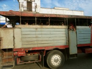 marina camion